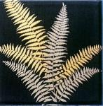 Metallic Fern